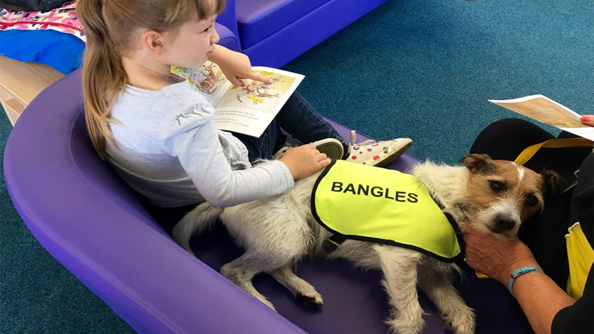 Become A Therapy Dog Uk