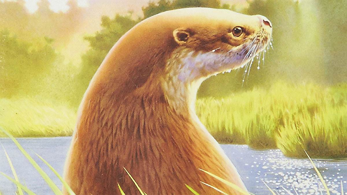 Tarka the Otter by Henry Williamson, illustrated by Annabel Large
