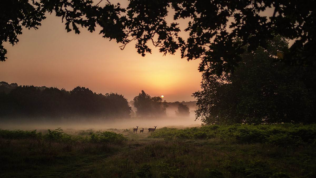 Deers at sunset
